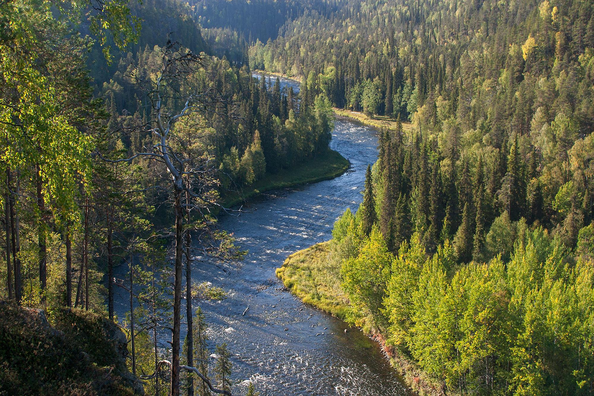 Joki virtaa vehreässä laaksossan lempeän auringon valossa.