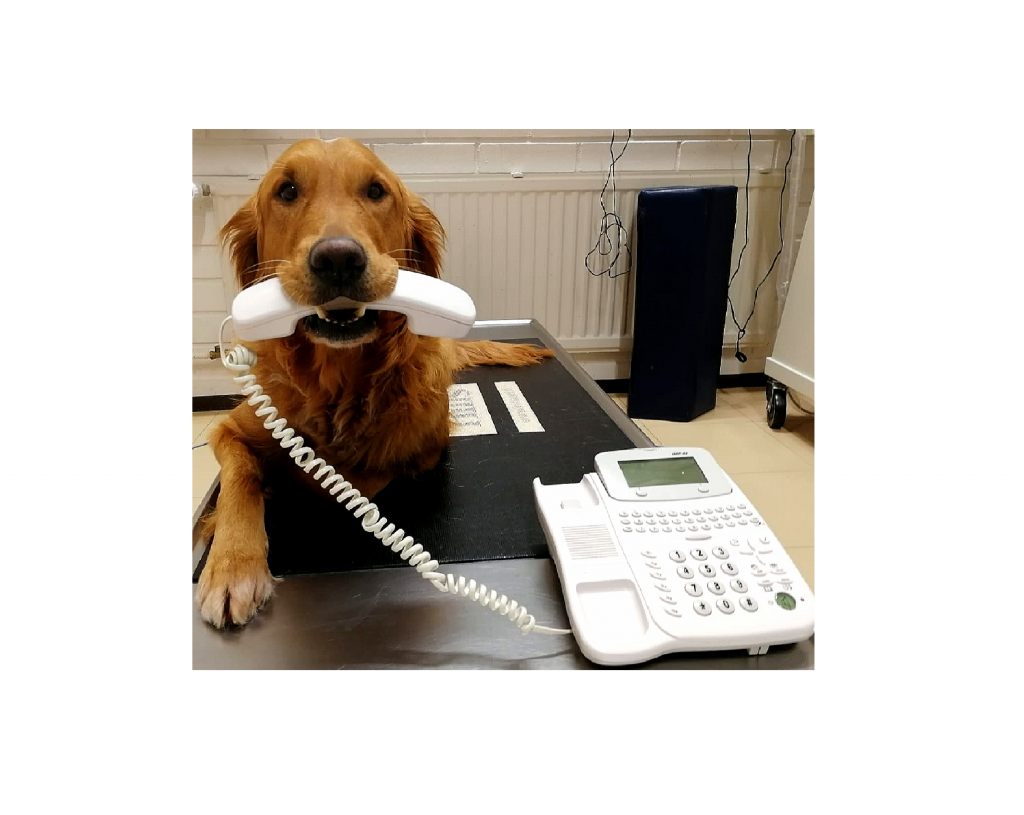 Koira puhelin suussa